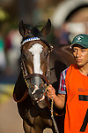 DEL MAR,CA-SEPTEMBER 03: Union Strike is entering the paddock before the Del Mar Debutante at Del Mar Race Track on September 03,2016 in Del Mar,California (Photo by Kaz Ishida/Eclipse Sportswire/Getty Images)