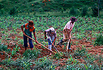 Trabalho infantil em roça de milho, agricultura familiar, Minas Gerais. 1978. foto © Juca Martins