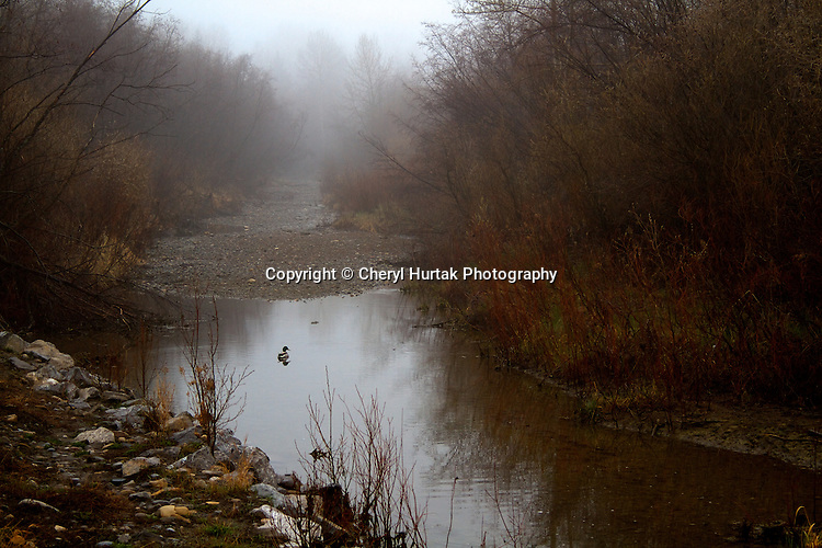 Sheep River on a foggy day