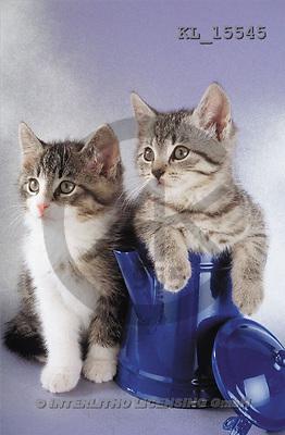 Interlitho, Alberto, ANIMALS, cats, photos, 2 cats in blue can(KL15545,#A#) Katzen, gatos
