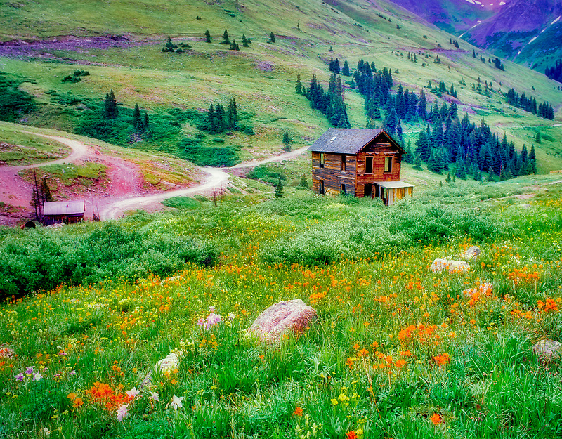 F00079M.tiff   Building in ghost town of Animas Forks with wild flowers. Colorado