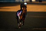 April 26, 2021: Search Results gallops in preparation for the Kentucky Oaks at Churchill Downs in Louisville, Kentucky on April 26, 2021. EversEclipse Sportswire/CSM