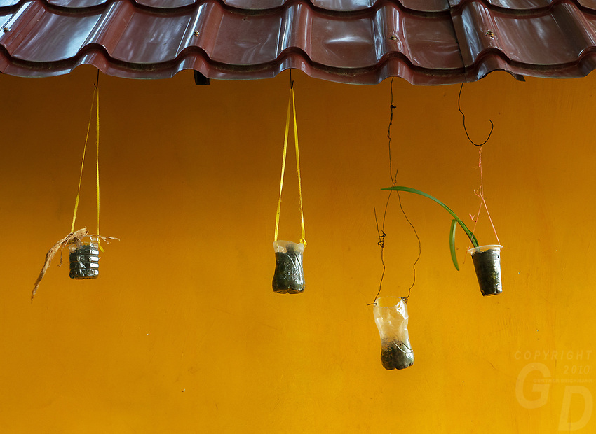 Yellow wall with small plants hangings,Monastery and temple area at Phnom Sampeau, Battambang Province, Cambodia.