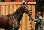 Hip #427 Royal Delta, winner of the 2011 Breeders Cup Ladies Classic sells to Besilu stables for $8,500,000