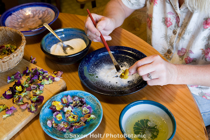 Sugar coating, crystallizing edible herb flowers, Viola Johnny Jump-up, for dessert recipe