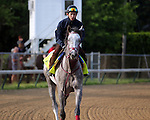 LOUISVILLE, KY - APRIL 25: Lani (Tapit x Heavenly Romance, by Sunday Silence) exercises on the track at  Churchill Downs, Louisville KY in preparation for the Kentucky Derby. Owner Ms. Yoko Maeda, trainer Mikio Matsunaga. (Photo by Mary M. Meek/Eclipse Sportswire/Getty Images)