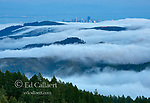Coastal Fog, Marin County Headlands, GGNRA, San Francisco, California