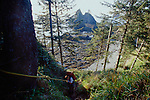 Olympic National Park, Shi Shi Beach, Point of the Arches, Washington State, Pacific Northwest, woman ascending headland, using fixed ropes,  Pacific Ocean, Northwest coast, Olympic Peninsula, North America, USA,.