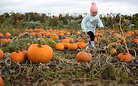 BNPS.co.uk (01202) 558833. <br /> Pic: CorinMesser/BNPS<br /> <br /> Pictured: Lily Sullivan, 4, picking pumpkins. <br /> <br /> P p p pick up a pumpkin...<br /> <br /> Families flock to Sopley Farm near Christchurch, Dorset to pick out a pumpkin in time for halloween.
