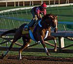 October 28, 2014:  V E Day, trained by Jimmy Jerkens, exercises in preparation for the Breeders' Cup Classic at Santa Anita Race Course in Arcadia, California on October 28, 2014. Scott Serio/ESW/CSM