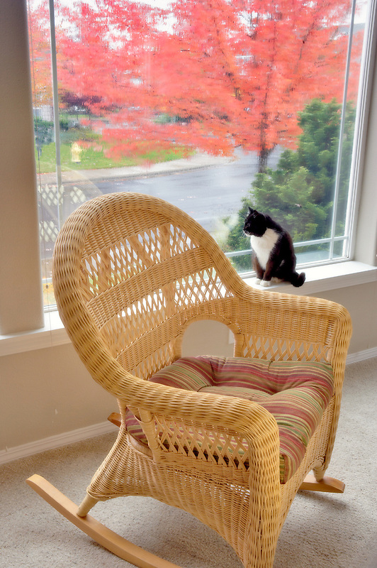 Wicker rocking chair with front window fall view and rain and cat. Wilsonville. Oregon