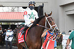 March 20, 2021: Starrininmydreams in the  Louisiana Derby at Fair Grounds Race Course in New Orleans, Louisiana. Parker Waters/Eclipse Sportswire/CSM