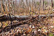 A metal wheelbarrow at Hedgehog Camp (part of logging Camp 12) along the abandoned Beebe River Railroad in Waterville Valley, New Hampshire. This railroad was in operation from 1917-1942, and this wheelbarrow is a protected artifact of the New Hampshire logging era. The removal of historical artifacts from federal lands without a permit is a violation of federal law.