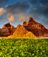 Yellow Sweet Clover and rock formations. Badlands National Park, South Dakota.