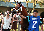 08 October. Sidney's Candy in the paddock before finishing 3rd in the Shadwell Turf Mile.