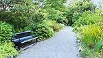 Garden bench on path in Highline Botanical Garden, Sea-Tac, Tuckwila, Burien, Wahington.  Lush botanical garden.