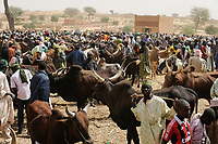 NIGER, Sahel, Zinder, cattle market with Zebu cows