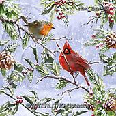 Marcello, CHRISTMAS SYMBOLS, WEIHNACHTEN SYMBOLE, NAVIDAD SÍMBOLOS, paintings+++++,ITMCXM1475A,#XX# ,red robin