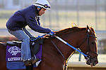 Haynesfield works in preparation for The Breeders' Cup at Churchill Downs. 10.30.2010..photo Ed Van Meter