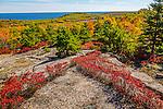 Blueberry foliage under Champlain Mountain in Acadia National Park, Maine, USA