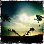 HAWAII ART SQUARES
