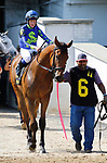 June 26,, 2021: #6 Knocker Down in the Bashford Manor at Churchill Downs.  Louisville, KY on June 26, 2021.  Candice Chavez/ESW/CSM