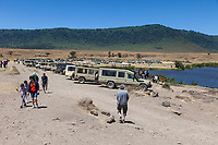 Tanzania. Ngorongoro.  Vehicles at Picnic Lunch Stop in the Caldera.