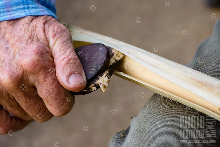Kapa making on the Big Island: A kapa maker uses a niho 'oki (shark's-tooth knife) to loosen the inner bark of the wauke (paper mulberry).