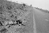 Rwanda - Goma 1994
