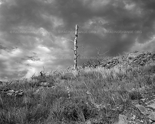 Sturgis, South Dakota<br /> July 28, 2011<br /> <br /> A fire ravaged tree remains standing on a ridge on Bear Butte in South Dakota, where the Sioux and Cheyenne tribes received their creation myth. The small mountain on the edge of the Black Hills  is still a religious site of great importance, despite being only a few miles from the biker bars and rallies of Sturgis.