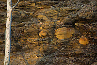 Through erosion, large concretions have become exposed in the bluffs of Devonian-age Ohio Shale along the Olentangy River, near the Delaware and Franklin County border. Looking somewhat like cannonballs shot into a cliff, deformation of the shale bedding can clearly be seen. The nuclei of these concretions are often found to be mineralized fossils. Highbanks Metro Park, Ohio, USA.