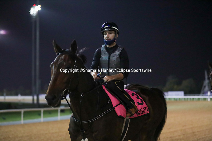 March 25, 2021: UAE Derby contender El Patriota trains on the track for trainer Antonio Cintra at Meydan Racecourse, Dubai, UAE.<br /> Shamela Hanley/Eclipse Sportswire/CSM