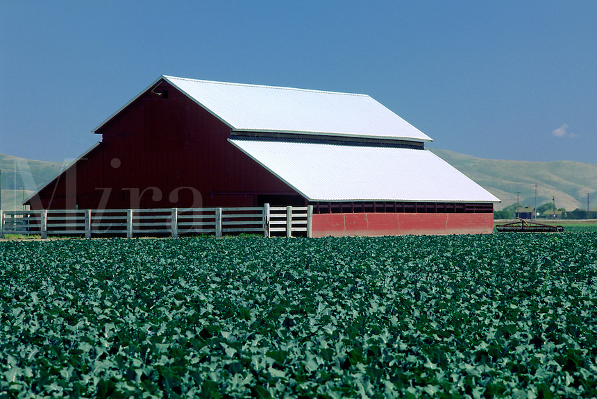Red barn and broccoli field - Salinas Valley, California