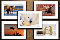 Collection III<br />