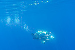 Guadalupe Island, Baja California, Mexico; a mobile shark cage moving through blue water with rays of sunlight