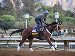 October 26, 2014: Unbridled Forever exercises in preparation for the Breeders' Cup Distaff at Santa Anita Park in Arcadia, California on October 26, 2014. Zoe Metz/ESW/CSM