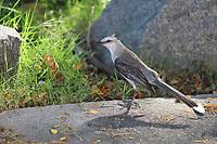 VITÓRIA, ES, 29.12.2019 - IMAGEM DO DIA-ES - Pássaro posa para fotos, na Ilha do Frade, em Vitória - ES, neste domingo, 29. (Foto Charles Sholl/Brazil Photo Press)
