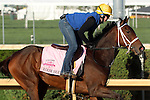 April 20, 2014 Room Service gallops with Calamity Compton at Churchill Downs.  She is a Kentucky Oaks contender trained by Wayne Catalano who won the Ashland Stakes at Keeneland in a dead heat with Rosalind. Owners are Gary and Mary West.