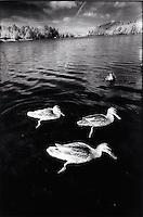 Ducks on pond<br />