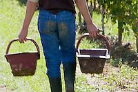 Europe/France/Aquitaine/33/Gironde/ Sainte-Colombe: Vendanges manuelles   chez Phillipe Carille ,viticulteur Cotes de Castillon AOC-, Poupille et Chateau Poupille