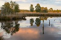 GERMANY, lower saxonia, Pietz moor and forest / DEUTSCHLAND, Niedersachsen, Schneverdingen, Wald und Moor, Pietzmoor