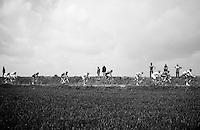 peloton stretched over the cobbles<br /> <br /> Paris - Roubaux 2014