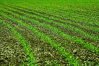 Farming Green