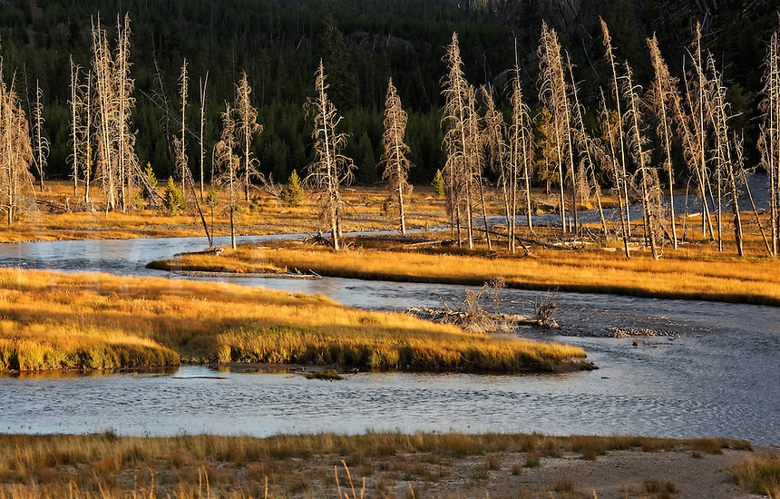 Madison River winding through grassy autumn meadows, Yellowstone National Park, Wyoming, USA