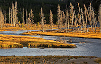 Madison River winding through grassy autumn meadows, Yellowstone National Park, Wyoming, USA