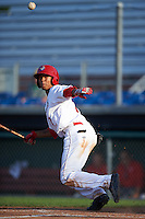 Auburn Doubledays center fielder Blake Perkins (7)  lays down a bunt during a game against the Williamsport Crosscutters on June 26, 2016 at Falcon Park in Auburn, New York.  Auburn defeated Williamsport 3-1.  (Mike Janes/Four Seam Images)