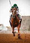 DEL MAR CA - JULY 30: Stellar Wind #2 with Victor Espinoza aboard wins the Clement L Hirsch Stakes at Del Mar on July 30, 2016 in Del Mar, California. (Photo by Alex Evers/Eclipse Sportswire/Getty Images)