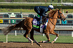 ARCADIA, CA  OCTOBER 30: Breeders' Cup Mile entrant Uni, trained by Chad C. Brown,   exercises in preparation for the Breeders' Cup World Championships at Santa Anita Park in Arcadia, California on October 30, 2019.  (Photo by Casey Phillips/Eclipse Sportswire/CSM)