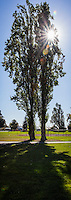 A park, a tree, a sunburst - cropped vertically 8.5 X 3.  Suitable for a border or a bookmark, write your own text.