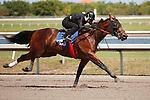 #123Fasig-Tipton Florida Sale,Under Tack Show. Palm Meadows Florida 03-23-2012